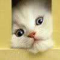Profile image for gunterblevins85yozvpq
