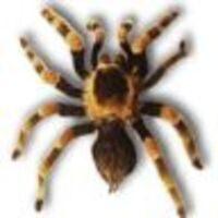 Profile image for corneliusbelchercjusx