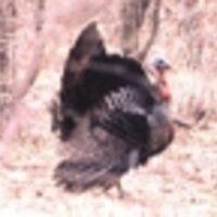 Profile image for hollishanley27gogihc