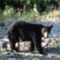 Profile image for boothmooney45ilnejn