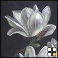 Profile image for bobbyhyde4396