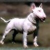 Profile image for beaperrin