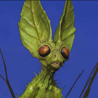 Profile image for Leyfarer