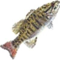 Profile image for jamisonezhpickett