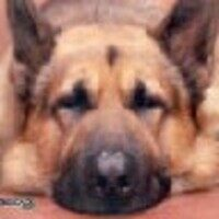 Profile image for bainbxncooley