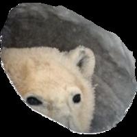 Profile image for mossuary