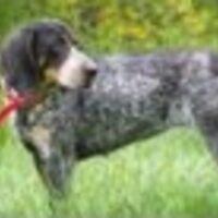 Profile image for strandhhcbraswell