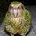 Hb Kakapo