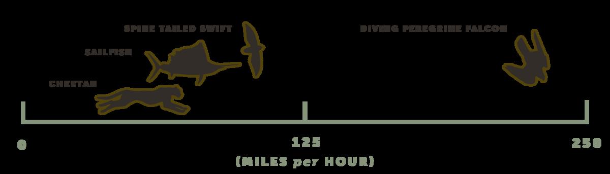 The world's fastest animal