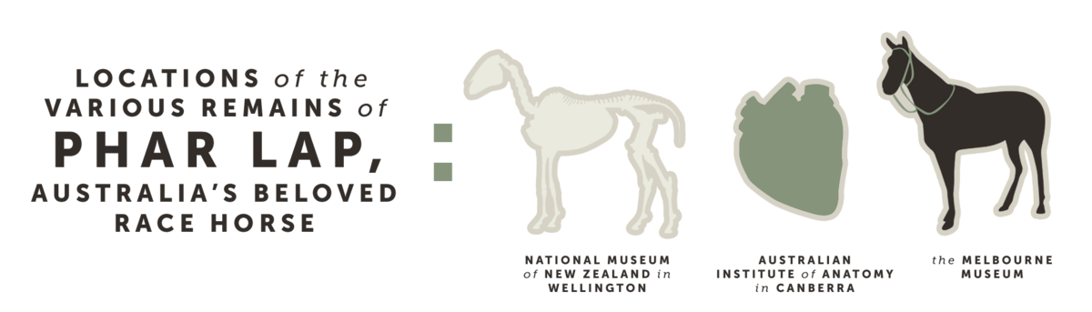 Locations of the various remains of Phar Lap, Australia's beloved race horse