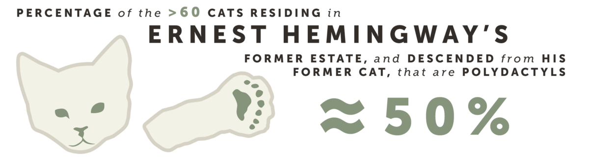 Percentage of the >60 cats residing in Ernest Hemingway's former estate, and decended from his former cat, that are polydactyls