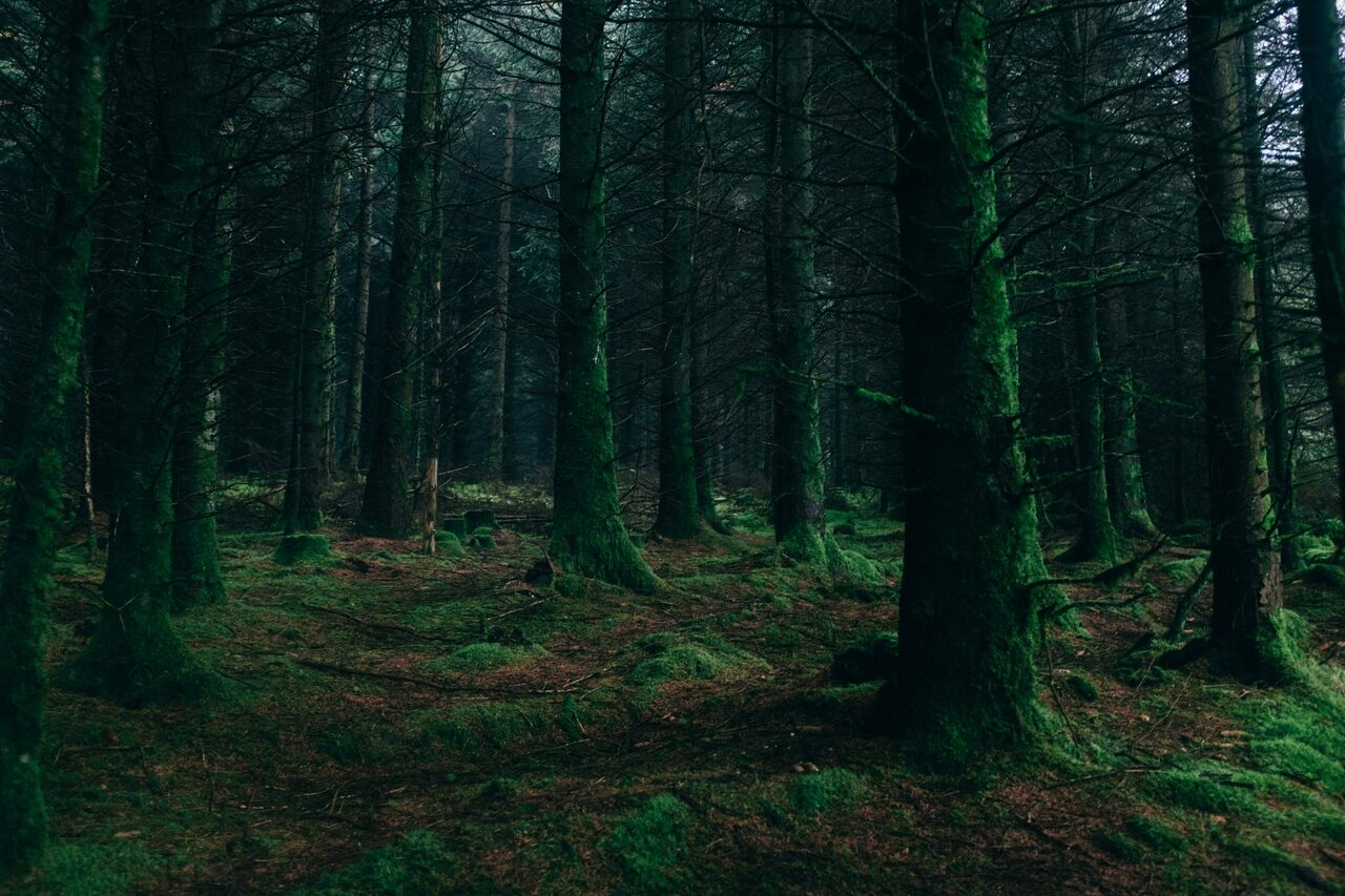 """It's scary and dark out in the dark forest."""