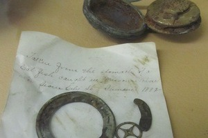 Objects of Intrigue: A Pocket Watch Swallowed by a Catfish