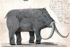 Thomas Jefferson Built This Country On Mastodons
