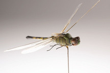 Object of Intrigue: The CIA's Dragonfly Drone