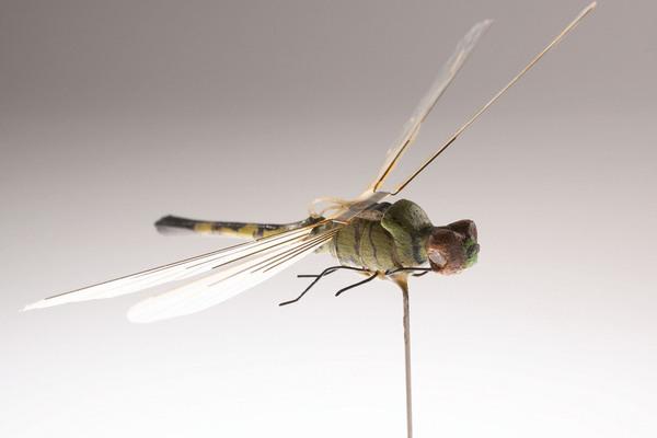 Dragonfly? Dragonspy