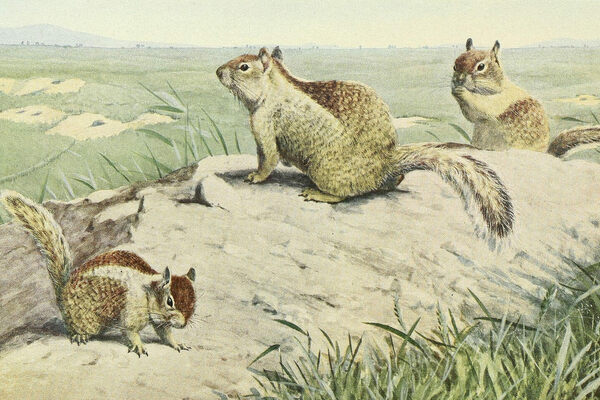 When Squirrels Were One of America's Most Popular Pets