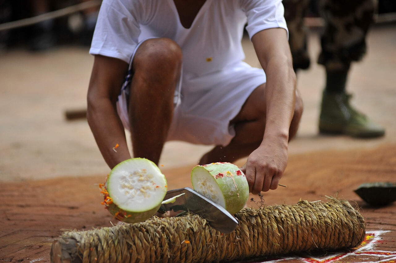A Nepalese devotee cuts a melon on the ninth day of Dashain in Nepal.