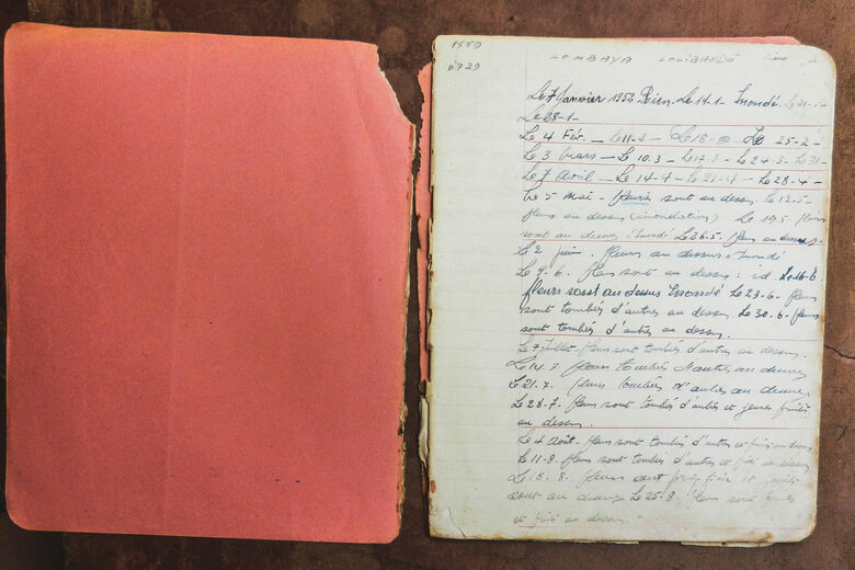 Forgotten Notebooks Chronicled the Lives of Congolese Trees for 20 Years