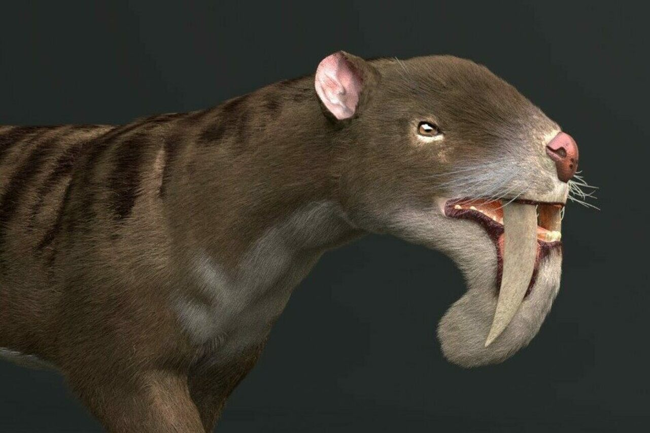 A 3D model of the extinct marsupial <em>Thylacosmilus atrox</em>.