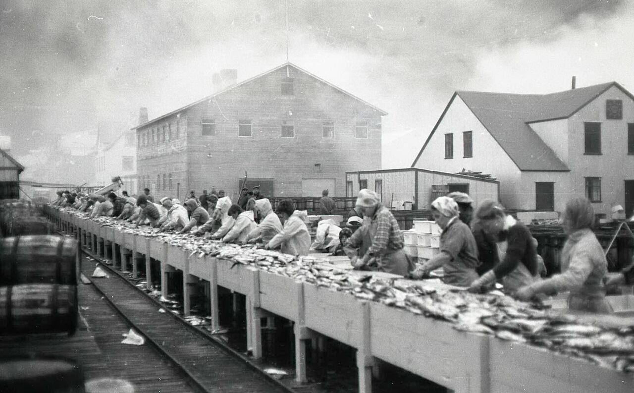 Women preparing herring for shipment across Europe.