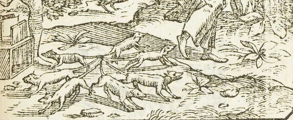 The Complicated Inconclusive Truth Behind Rat Kings Atlas Obscura
