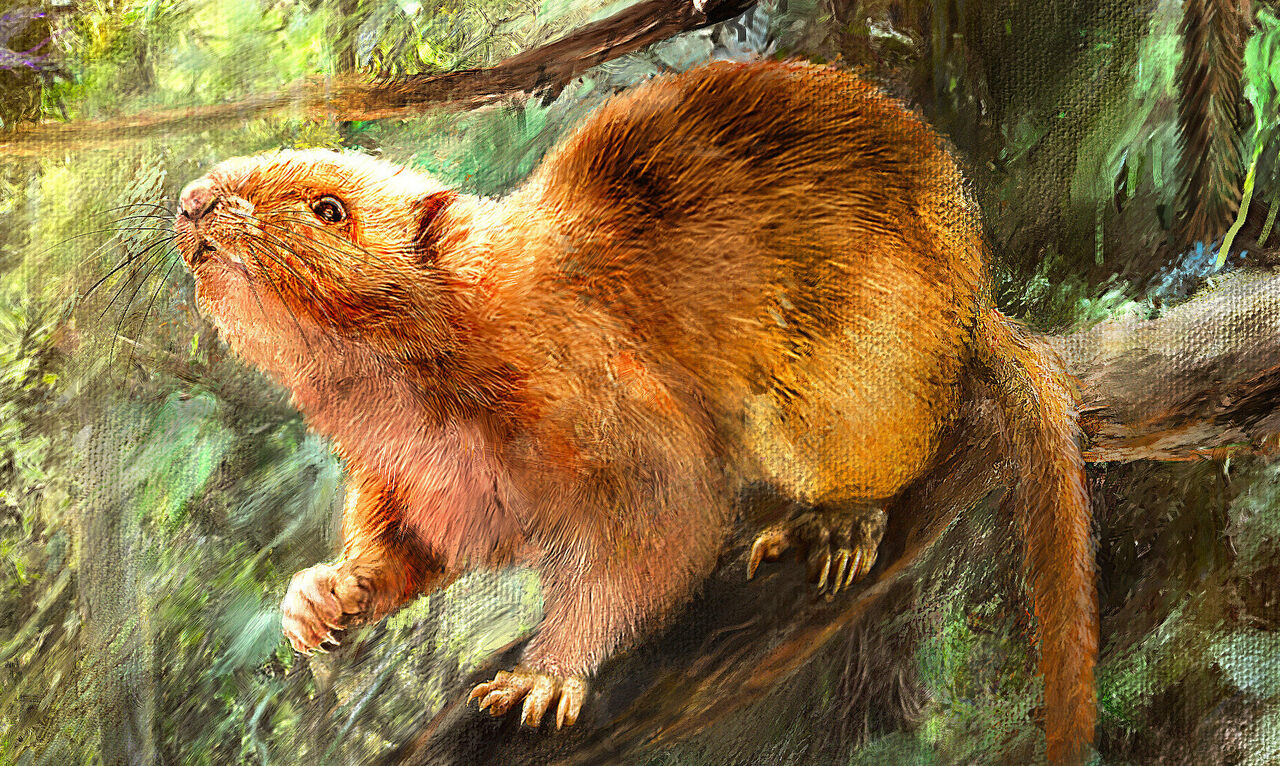An artist's rendering of one of the three new giant cloud rat species.