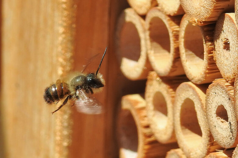 These Girl Scouts Save Wild Bees, One Homemade 'Hotel' at a Time