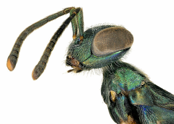 L.A.'s Insects Are Hairy, Iridescent, and Crazy Photogenic
