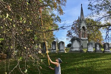 Joy Doumis picks apples at Green-Wood Cemetery.