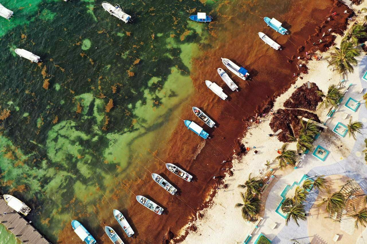 Tons of sargassum in Puerto Morelos, Mexico, seen here in 2019, present a distinct problem for the tourist industry.