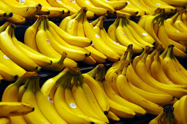 No, the Banana Apocalypse Is Not Around the Corner