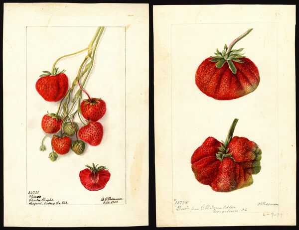 Why the USDA Hired Artists to Paint Thousands of Fruits