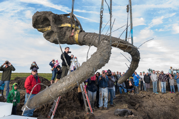 Found: A Woolly Mammoth in Michigan