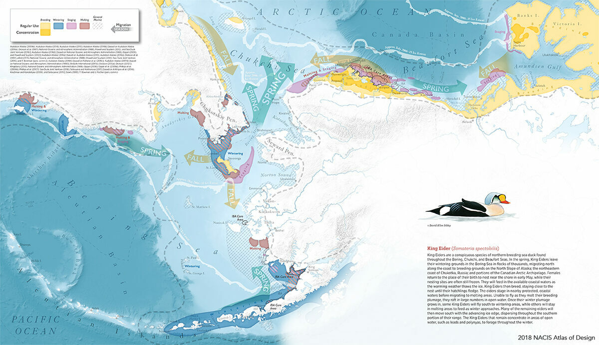 <em>King Eider</em> by Daniel P. Huffman visualizes the arctic life of the king eider sea duck. This is one of 135 pieces that Huffman produced for the <em>Ecological Atlas of the Bering, Chukchi, and Beaufort Seas</em>.