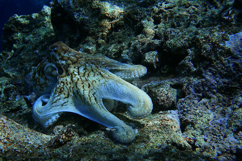 Can Octopuses Teach Us How to Hide?