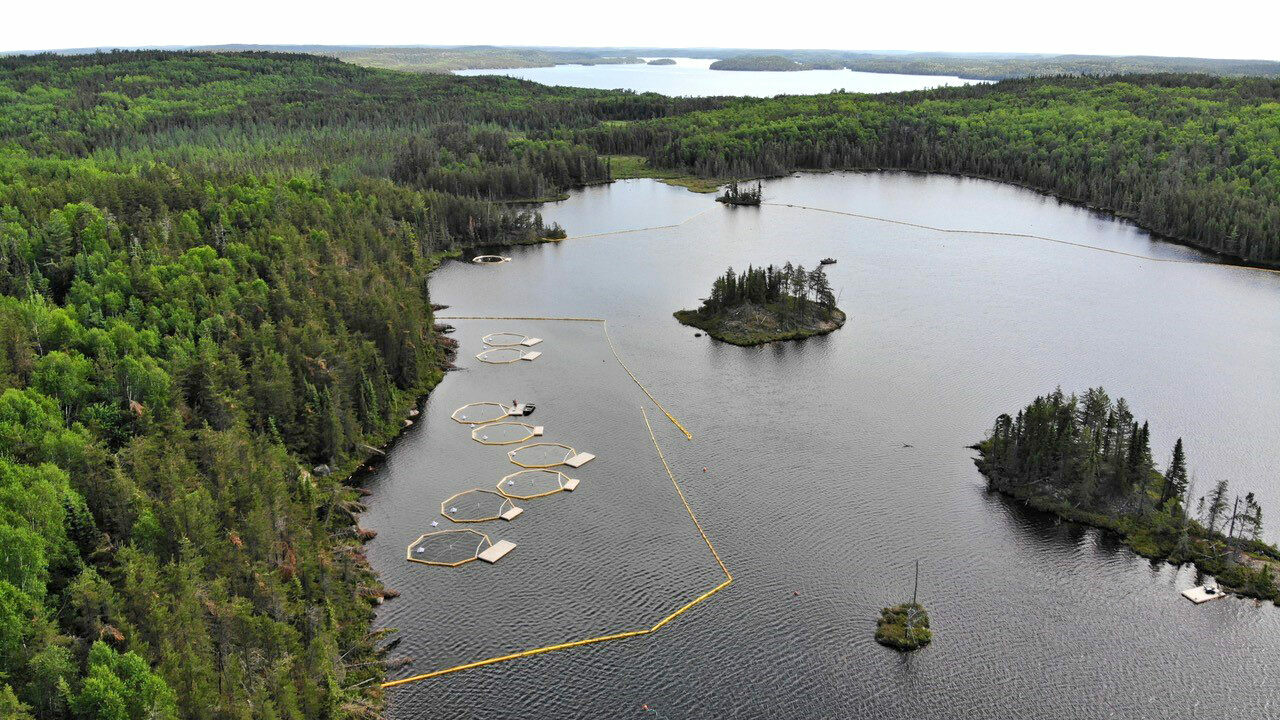 At the Experimental Lakes Area, scientists study the effects of oil on lake organisms.