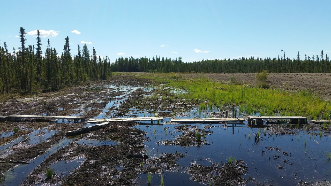 Cut off by a road, this bog has flooded unnaturally.