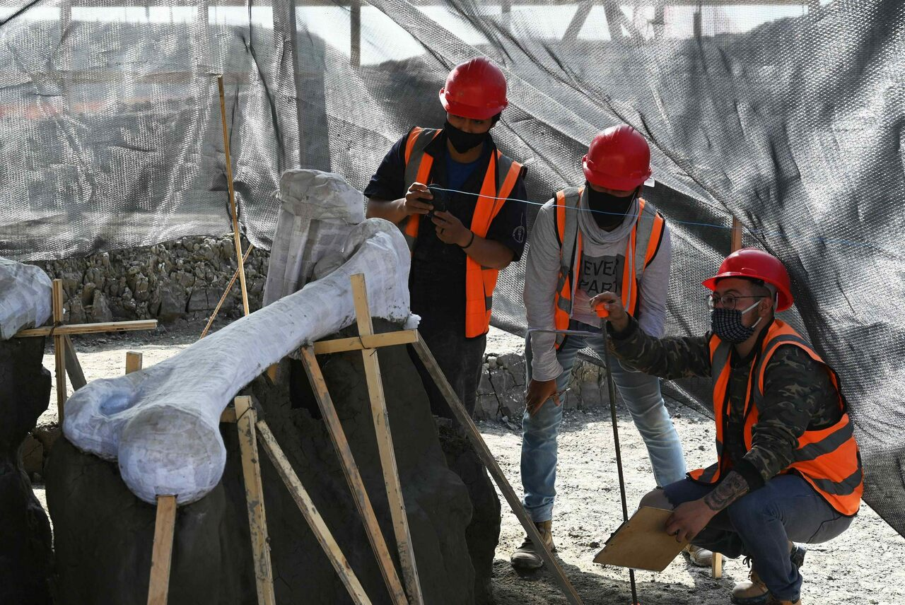 Two thousand mammoth bones have turned up at the site of a new Mexico City airport. Where will scientists put them all?