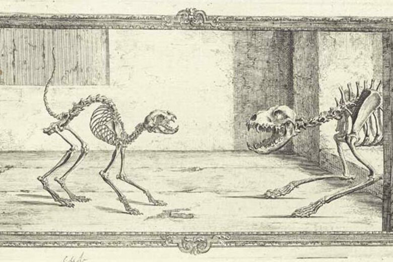 In The Good Old Days Anatomy Drawings Were Full Of Whimsy