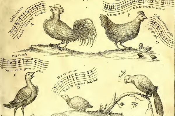 How We Hear Birdsong
