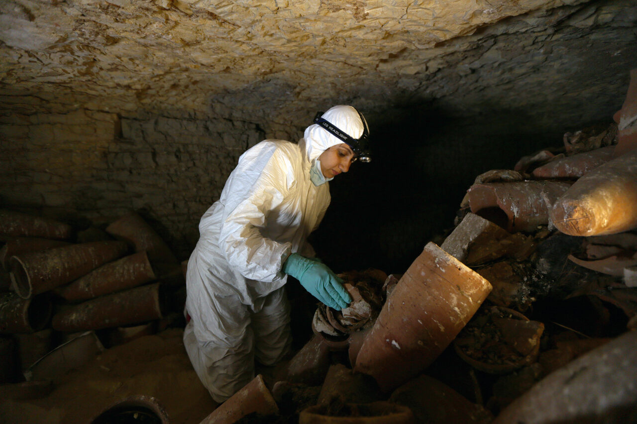 Researchers analyzed ancient DNA from ibis mummies, millions of which have been found in Egyptian catacombs.