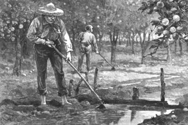Chinese immigrants, like this man in an orange orchard, played an important role in American agriculture.