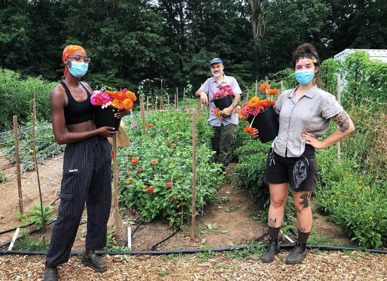 Zainab Muhammad, Grimaldi Baez, and Tania María Ríos Marrero harvest zinnias for Truelove Seeds.