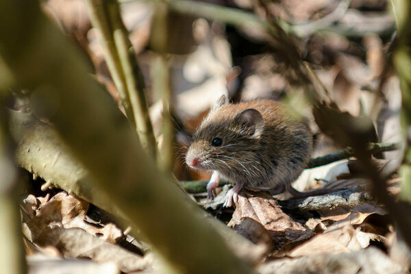 Animals Do Better Living in an Irradiated Forest Than Near
