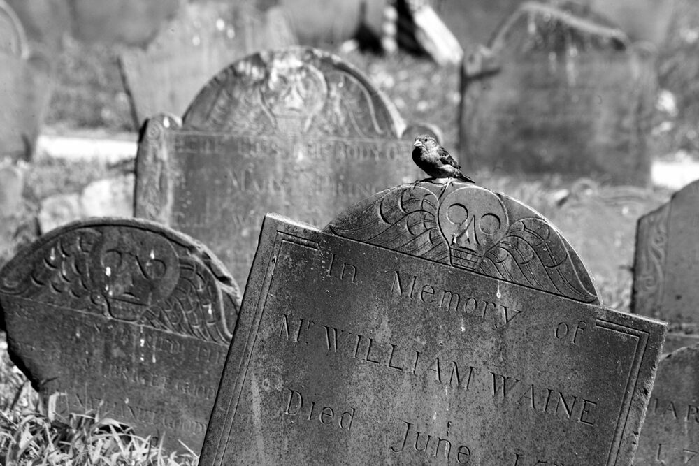 Birds sometimes find suitable perches in cemeteries—including this one, in Boston.