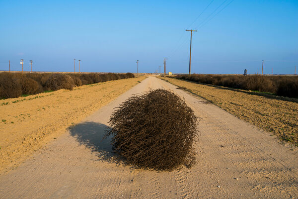 California's Meddlesome Tumbleweeds Could Grow Even More