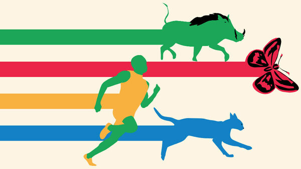 How History's Best Athletes Compare To Extremely Average Animals