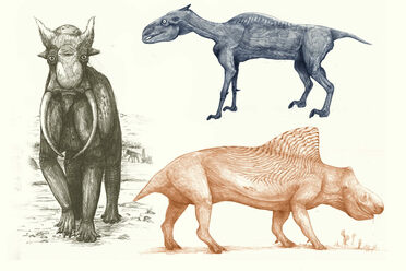 Elephants, zebras, and rhinos would all look pretty different if they were interpreted the same way dinosaurs are.