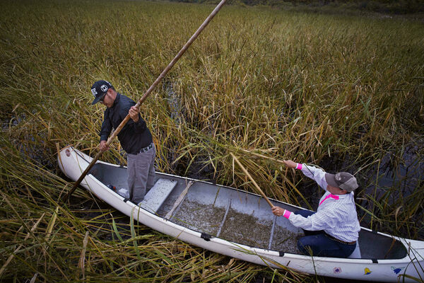 The Cross-Border Indigenous Battle for Wild Rice